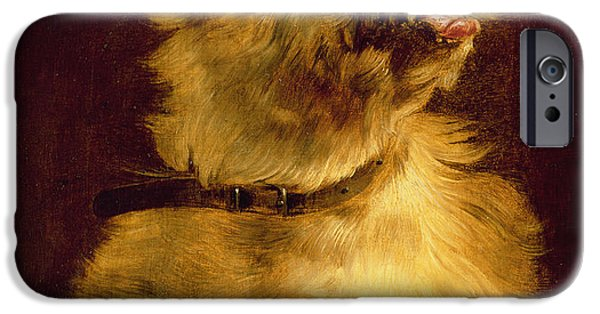 Ledge iPhone Cases - Cairn Terrier   iPhone Case by George Earl