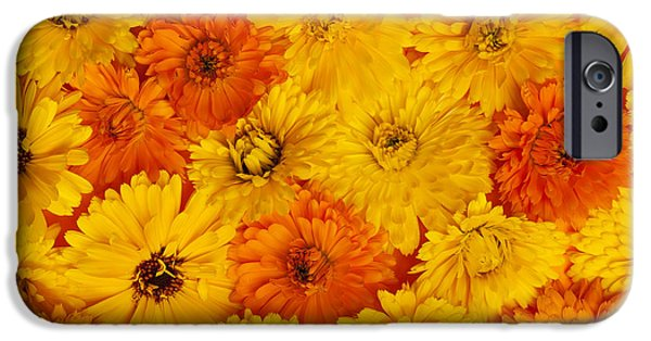 High Angle iPhone Cases - Calendula flowers iPhone Case by Elena Elisseeva
