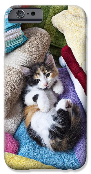 Juveniles iPhone Cases - Calico kitten on towels iPhone Case by Garry Gay