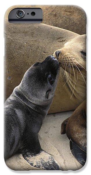 California Sea Lion And Newborn Pup San iPhone Case by Suzi Eszterhas