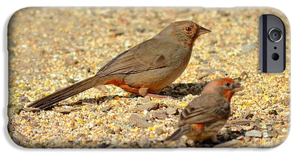 House iPhone Cases - California Towhee with House Finch iPhone Case by  iunona Harris
