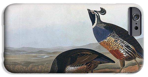 Male Drawings iPhone Cases - Californian Partridge iPhone Case by John James Audubon