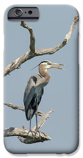 Morning iPhone Cases - Call of the Wetlands iPhone Case by Dawn Currie