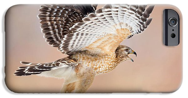 Hawk iPhone Cases - Call Of The Wild Square iPhone Case by Bill Wakeley