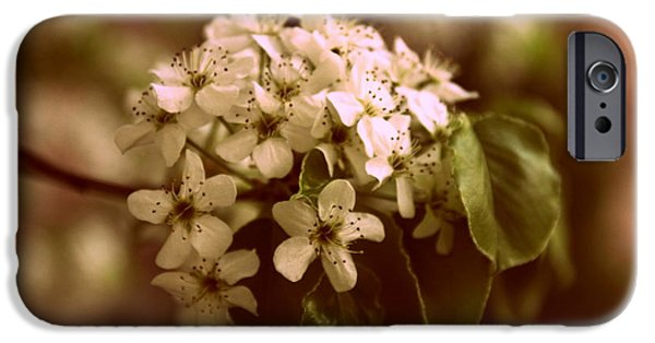 Pears iPhone Cases - Callery Pear Blossoms iPhone Case by Jessica Jenney
