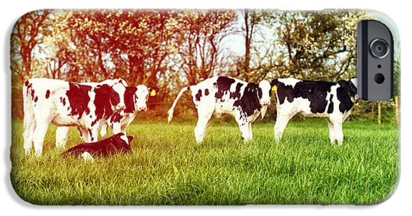 Farming Photographs iPhone Cases - Calves In Spring Field iPhone Case by Amanda And Christopher Elwell