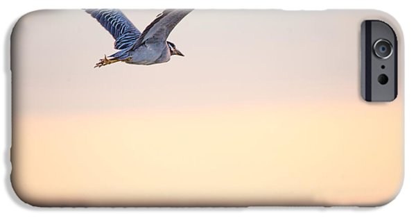 Flying Seagull iPhone Cases - Can You Fly by Darrell Hutto iPhone Case by Darrell Hutto