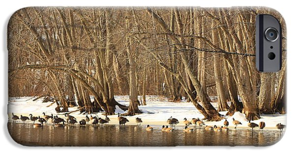 Concord. Winter iPhone Cases - Canada Geese on Concord River iPhone Case by John Burk