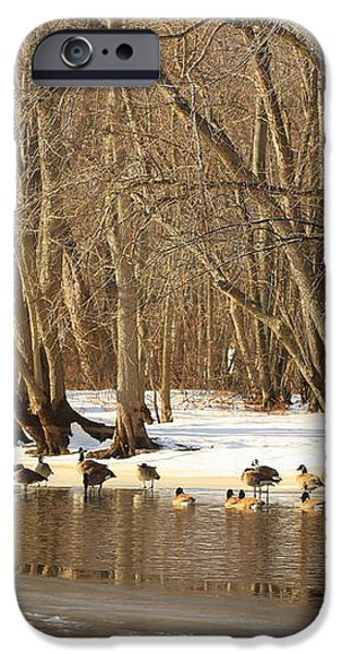 Canada Geese on Concord River iPhone Case by John Burk
