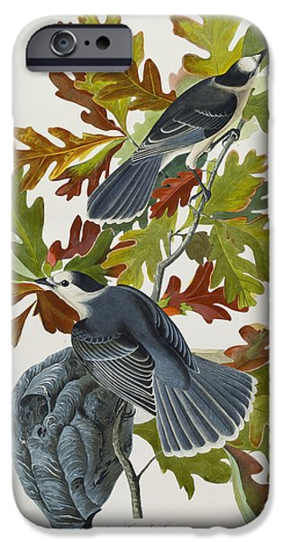 Animal Drawings iPhone Cases - Canada Jay iPhone Case by John James Audubon