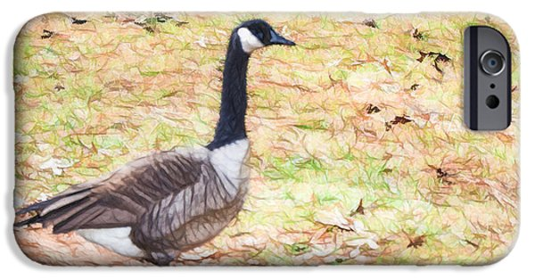 Canadian Geese Paintings iPhone Cases - Canadian geese 4 iPhone Case by Lanjee Chee