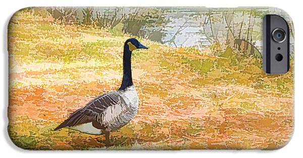 Canadian Geese Paintings iPhone Cases - Canadian geese 6 iPhone Case by Lanjee Chee