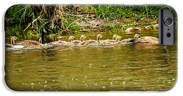 Duckling Photography iPhone Cases - Canadian Geese Family iPhone Case by Robert Bales
