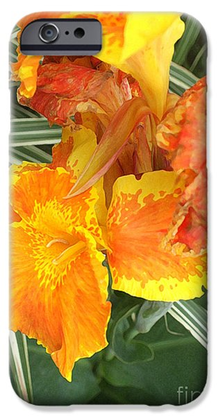 Canna iPhone Cases - Canna Lilies iPhone Case by David Bearden