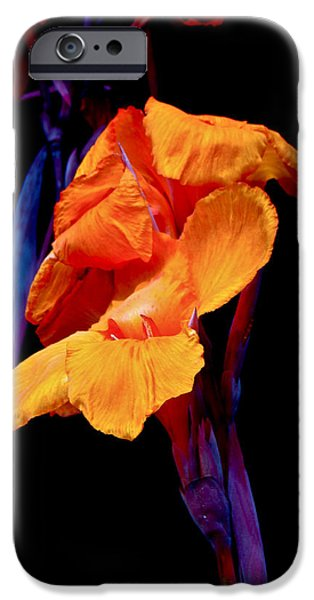 Canna Lilies on Black With Blue iPhone Case by Mother Nature