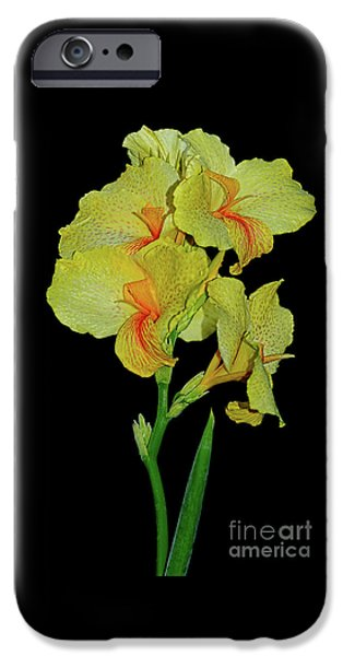 Canna iPhone Cases - Canna Lily Be So Pretty? iPhone Case by Kaye Menner