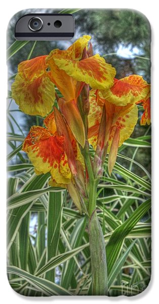 Canna iPhone Cases - Canna Lily iPhone Case by David Bearden