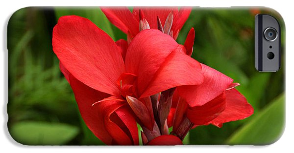 Canna iPhone Cases - Canna iPhone Case by Sandy Keeton