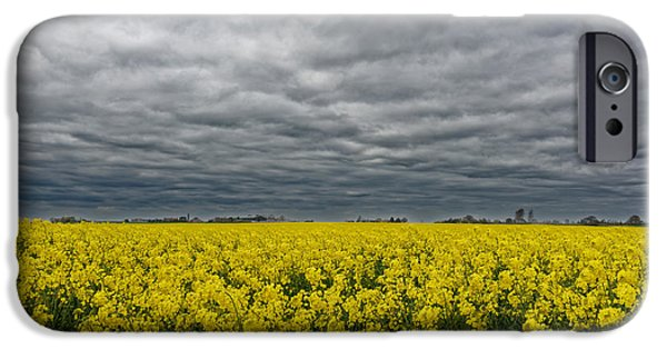 Canola Field iPhone Cases - Canola Field iPhone Case by Colin Woods