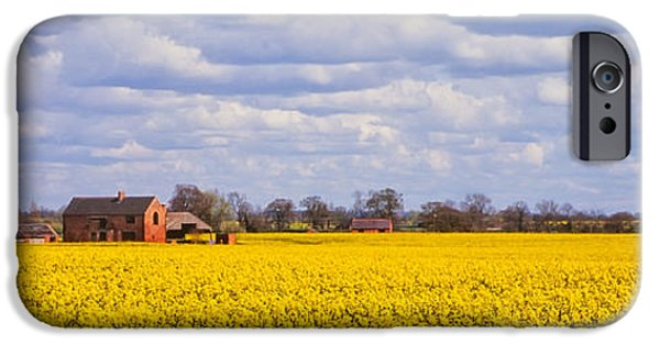 Canola Field iPhone Cases - Canola field iPhone Case by John Edwards