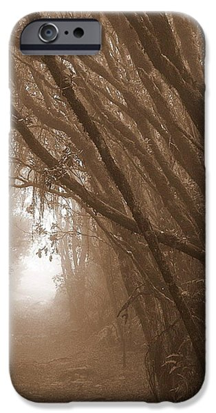 Creepy iPhone Cases - Canopy Creep iPhone Case by Frank Baden