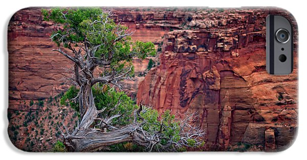 The Plateaus iPhone Cases - Canyonlands Juniper iPhone Case by Rick Berk