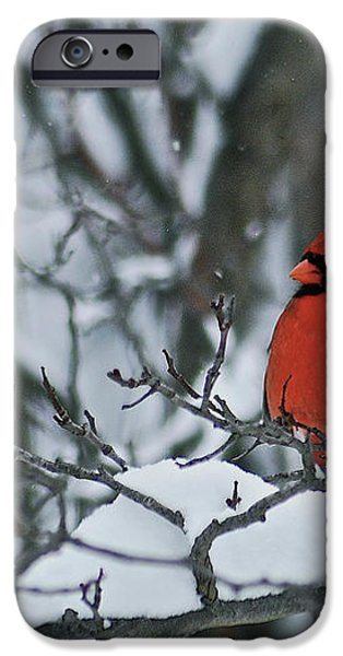 Cardinal and snow iPhone Case by Michael Peychich