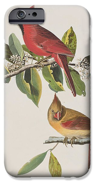 Feather Drawings iPhone Cases - Cardinal Grosbeak iPhone Case by John James Audubon