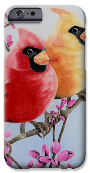 Flora Drawings iPhone Cases - Cardinal Love  iPhone Case by Sharon Patterson