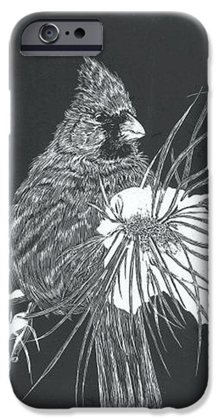 Snow iPhone Cases - Cardinal scratch board iPhone Case by Darren Cannell
