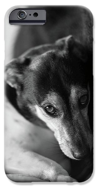 Black Dog iPhone Cases - Cared For iPhone Case by Mike Reid
