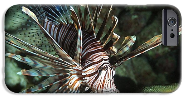 Marine iPhone Cases - Caribbean Lion Fish iPhone Case by Amy McDaniel