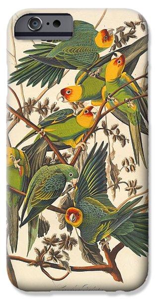 Animal Drawings iPhone Cases - Carolina Parrot iPhone Case by John James Audubon
