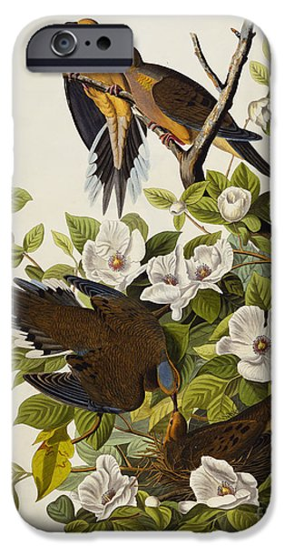 Flowers Drawings iPhone Cases - Carolina Turtledove iPhone Case by John James Audubon