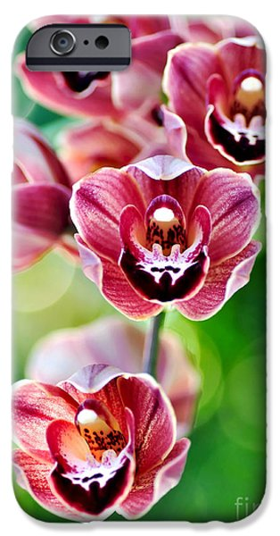 Orchids Photographs iPhone Cases - Cascading Miniature Orchids iPhone Case by Kaye Menner