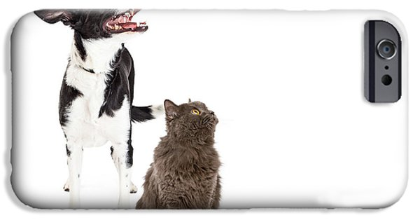 Mutt iPhone Cases - Cat and Dog Looking Up Into Blank Copy Space iPhone Case by Susan  Schmitz