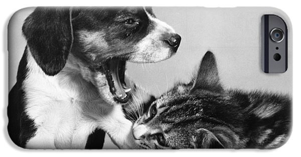 Animal Portraiture iPhone Cases - Cat And Dog Too Sleepy To Fight iPhone Case by Ylla