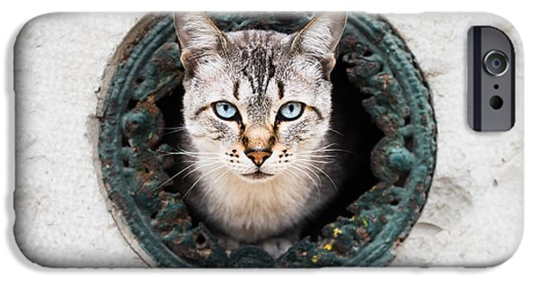 Old Blue Eyes iPhone Cases - Cat In The Wall II iPhone Case by Marco Oliveira