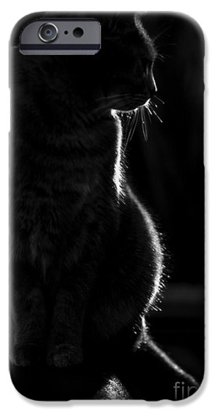 Cat iPhone Cases - Cat silhouette iPhone Case by Sheila Smart