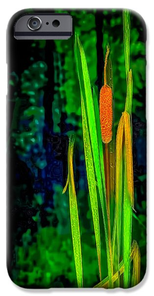 Nature Center Pond iPhone Cases - Cat tails  on Miller Pond Boardwalk  iPhone Case by LeeAnn McLaneGoetz McLaneGoetzStudioLLCcom