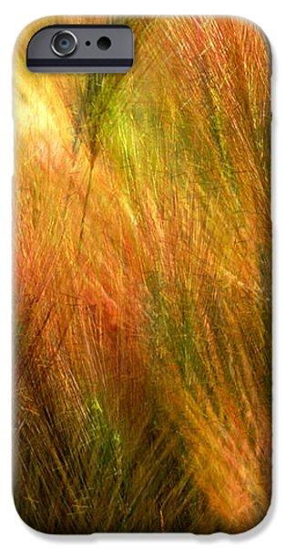 Cat Tails iPhone Case by Paul Wear