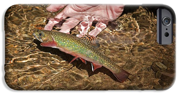 Animals Photographs iPhone Cases - Catch And Release Trout iPhone Case by John Stephens