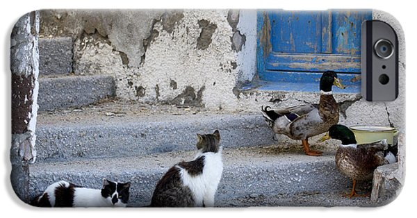 Fed iPhone Cases - Cats And Ducks In Greece iPhone Case by Jean-Louis Klein & Marie-Luce Hubert