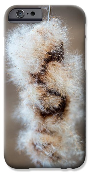 Cattails iPhone Cases - Cattail iPhone Case by Shane Holsclaw