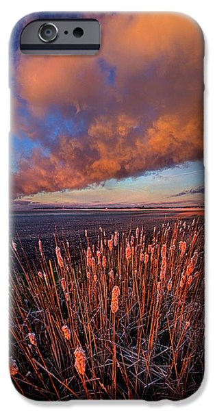 Cattails iPhone Cases - Cattails In The Wind iPhone Case by Phil Koch