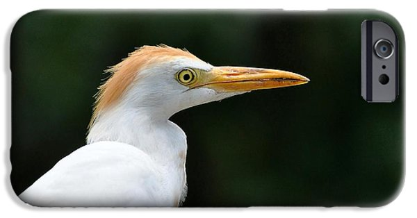 Cattle Egret iPhone Cases - Cattle Egret Close-Up iPhone Case by Al Powell Photography USA