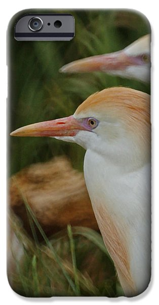 Cattle Egret iPhone Cases - Cattle Egrets Dry Brushed iPhone Case by Ernie Echols