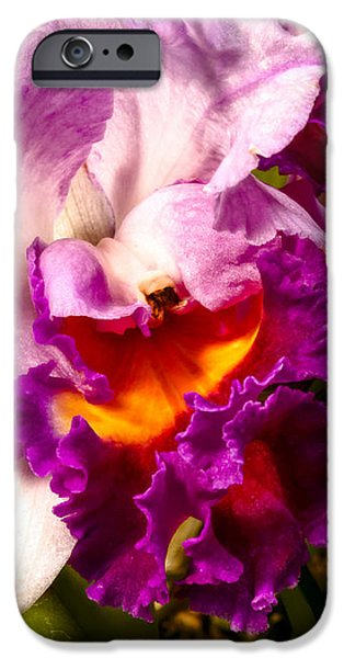 Cattleya iPhone Cases - Cattleya III iPhone Case by Christopher Holmes