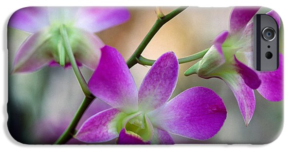Cattleya iPhone Cases - Cattleya Orchid Flower Blossoms, Close iPhone Case by Panoramic Images