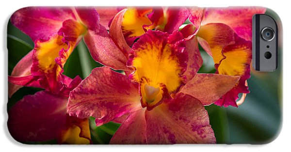 Cattleya iPhone Cases - Cattleya Orchids iPhone Case by Fiona Craig